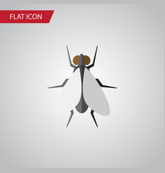 Isolated insect flat icon hum element can vector