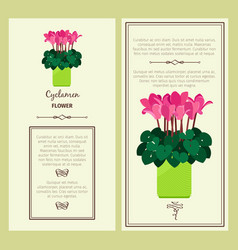 cyclamen flower in pot banners vector image vector image