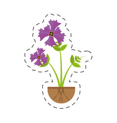 iris flower garden growing vector image
