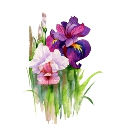 Watercolor blooming iris flowers vector