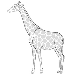 A sketch of a giraffe vector image