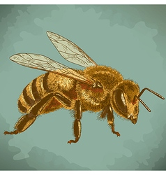 engraving honey bee retro vector image vector image