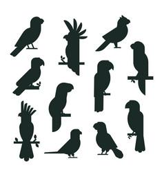 Parrots birds black silhouette animal nature vector