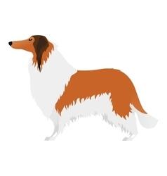 Isolated elegant large Collie dog on white vector image