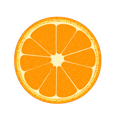 half of fruit orange vector image vector image