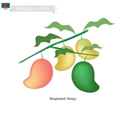 Fresh mango a famous fruit in bangladesh vector