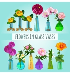 Flowers in glass vases vector