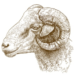 engraving head of ram vector image vector image