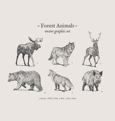 Forest animals vintage set vector