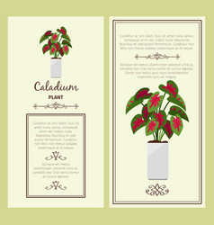 greeting card with caladium plant vector image vector image