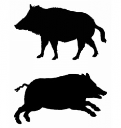 boars vector image
