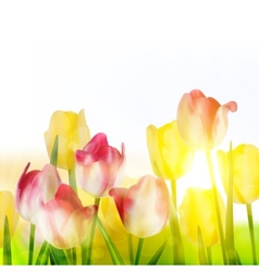 Beautiful tulips in spring time eps 10 vector