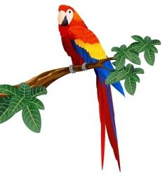 macaw bird vector image