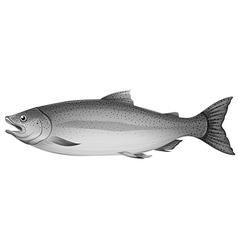 A grey trout fish vector