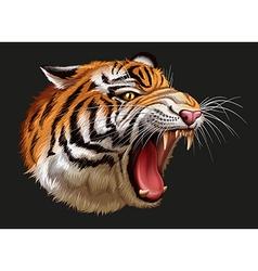 A head of a roaring tiger vector