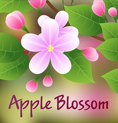 Blossoming apple tree branch with pink flowers vector image