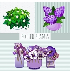 Purple flowers in pots potted plants vector image vector image