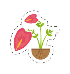 Anthurium leaf plant exotic growing vector