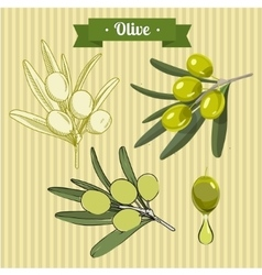 Set of green olives 2 vector
