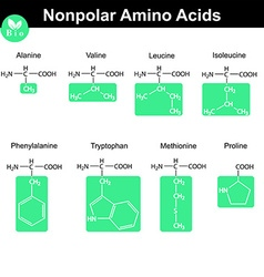 Amino acids with marked radicals nonpolar group vector image vector image
