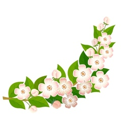 Blossoming branch vector image