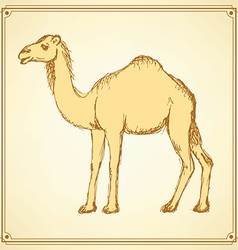 Sketch cute camel in vintage style vector image