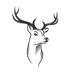 Deer head on white background vector image vector image