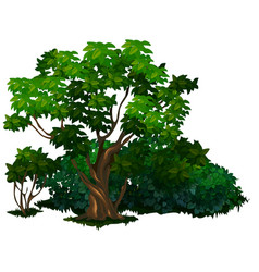 detailed tree in cartoon style isolated vector image