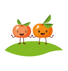 White background with realistic pair of tangerine vector