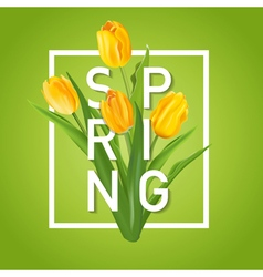 Spring flower background - with tulips vector