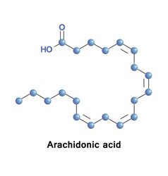 Arachidonic acid omega-6 fatty acid vector