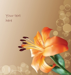 Orange lilly on abstract background vector