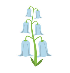 bell flowers flora botany vector image