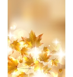 Autumn leaves very shallow focus vector