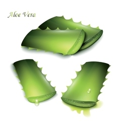 Set of cut pieces of aloe vera vector