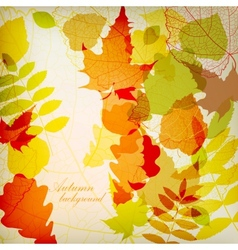 Bright colorful autumn leaves vector