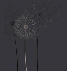 dark background with dandelion flower vector image vector image
