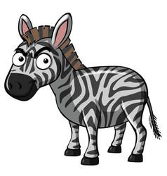 Serious zebra on white background vector