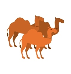 Animal figure of camels cartoon vector