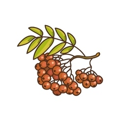 Red rowan cartoon drawing vector