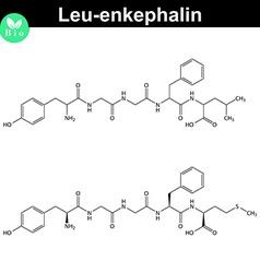 Leu-enkephalin molecular structure vector image vector image