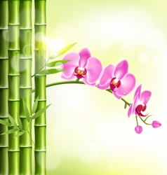 Orchid pink flowers with bamboo and sunlight on vector