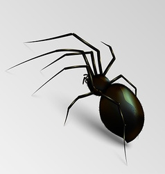 Scary spider vector