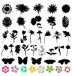 flower and butterfly vector image
