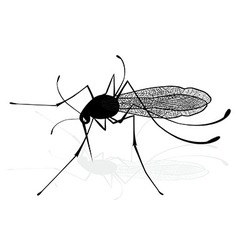 Insect a realistic gnat mosquito Mosquito vector image