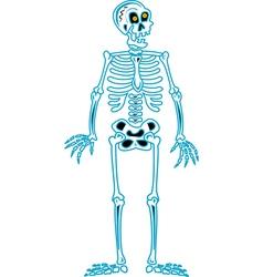 Skeleton Sketch vector image
