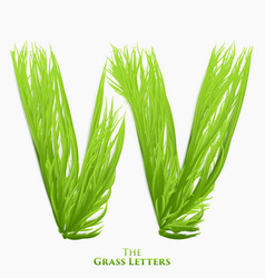 letter w of juicy grass alphabet green w vector image