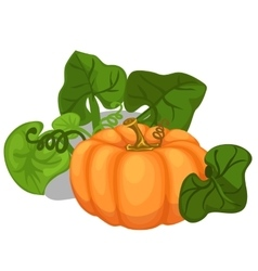 Big ripe pumpkin with leaves vegetable vector