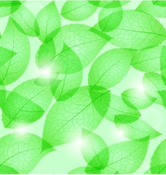 fresh green leaves vector image