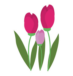 tulip bunch natural floral vector image